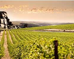 Weinanbaugebiet in Australien thumbnail