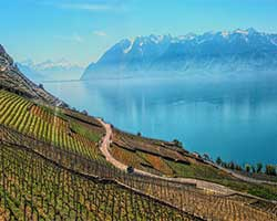 Overlooking Lake Geneva with vineyards in lavaux thumbnail